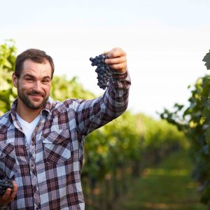 esperienze wine tour cantine toscane vino italiano